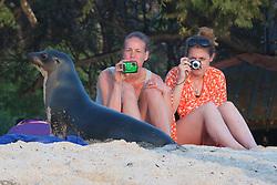 Photographing Galápagos Sea Lion, San Cristóbal