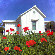 Red poppies in front of a small pristine white Texas farmhouse in Georgetown with the backdrop of a clear blue afternoon sky.