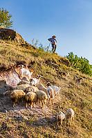 Hnevank , Armenia - August 23, 2019 :  shepherd with his cattle on landscape of Lorri region province