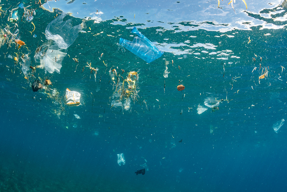 Plastic bags and other plastic pollutants are carried on tidal currents in North Sulawesi, Indonesia. Plastic pollution is among the largest problems the ocean faces.