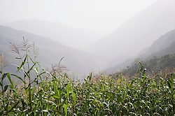 Landscape cornfield mountains mist valley