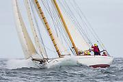 Juno sailing in the Opera House Cup regatta.