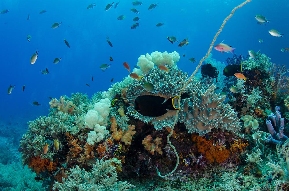 Coral reef diversity<br /> Raja Ampat<br /> West Papua<br /> Indonesia