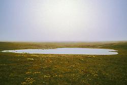 Ponds On Tundra