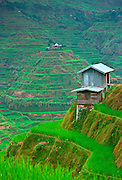 Stilted buildings overlooking rice terraces, Banaue, Philippines