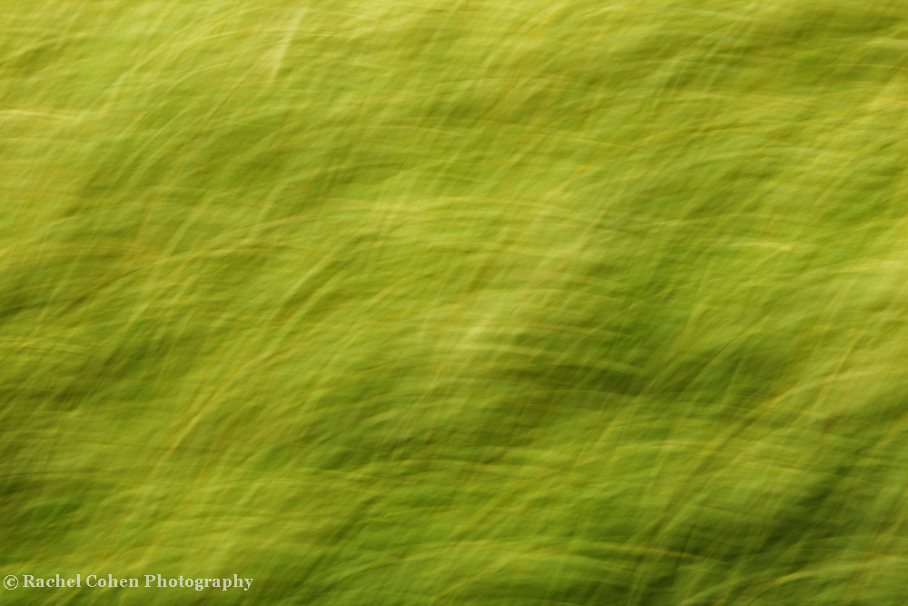 """""""Green Green Grass""""<br /> <br /> Green motion blur abstract.<br /> <br /> Nature Abstracts by Rachel Cohen"""
