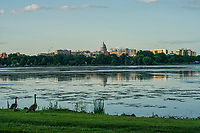 Geese & Madison Skyline