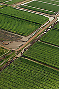 Sugarcane Plantations & empty Canal Punts<br /> GUYANA<br /> South America