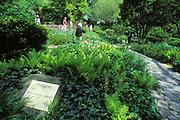 Shakespeare Garden, Central Park, Manhattan, New York