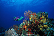 diver over reef,<br /> Cozumel, Mexico, ( Caribbean Sea )<br /> MR 138