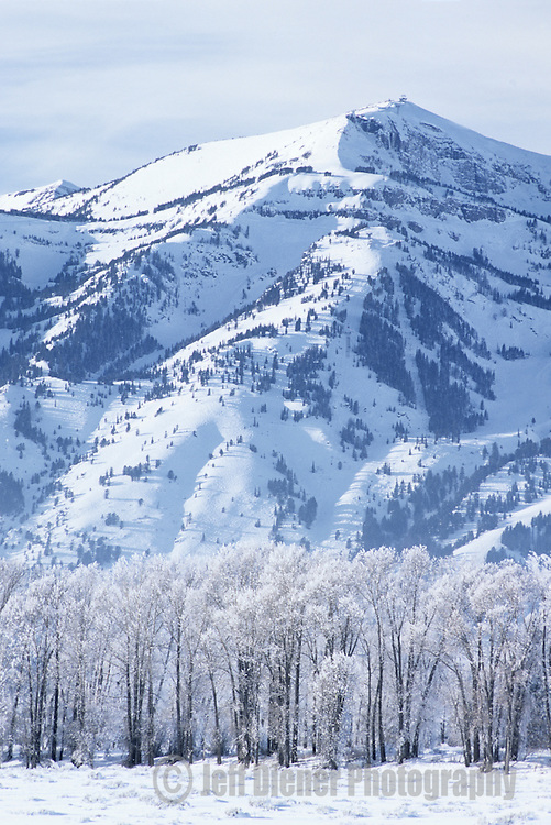 The Jackson Hole Mountain Resort rises behind frosted trees in Jackson Hole, Wyoming.