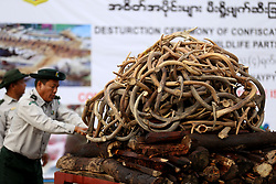 Oct. 4, 2018 - Nay Pyi Taw, Myanmar - Confiscated wildlife parts to be burnt are seen during the destruction ceremony of confiscated elephant ivory and wildlife parts in Nay Pyi Taw. Myanmar's Ministry of Natural Resources and Environmental Conservation on Thursday burnt confiscated elephant ivory and wildlife parts in capital city Nay Pyi Taw to combat illegal wildlife trade. (Credit Image: © U Aung/Xinhua via ZUMA Wire)