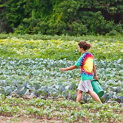 Farmhand Leah Visconti walks through a field of vegetables at the Crimson and Clover Farm in Northampton, Massachusetts.