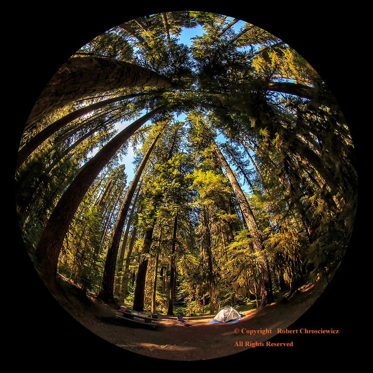 Olympic Camping: A fish eye view of the Sol Duc Campground has cedar trees towing over a lone tent in Olympic National Park, Washington, United States of America.