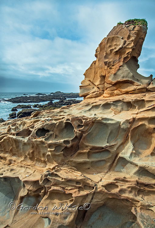 Sandstone rock eroded into formations called Tafoni rise along the Pacific Ocean coast at Bean Hollow State Beach near Pescadero, California.
