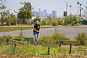 With the Los Angeles skyline in the background, students, parents and teachers work on the garden at the 24th Street School garden on Big Sunday, the largest annual citywide community service event in America, West Adams, Los Angeles, California, USA