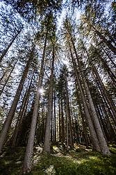 THEMENBILD - Fichtenbäume wachsen aus einem mit Moos bedeckten Waldboden, durch die Baumkronen leuchten Sonnenstrahlen. Kals am Samstag 10. Oktober 2020 // Spruce trees grow out of a forest floor covered with moss, sunrays shine through the treetops. Kals on Saturday, October 10, 2020. EXPA Pictures © 2020, PhotoCredit: EXPA/ Johann Groder