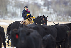 Wyoming cowgirl, Skye Clark, working cows, Smoot Wyoming<br /> <br /> The cowboys of the west are under assault because many don't like to see their cows on public land. I have written a couple of articles articulating the problem. My photos are not to be used for anti public land ranching interests.
