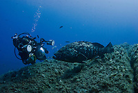 Linda Pitkin photographing Dusky Grouper (Epinephelus marginatus)<br /> France: Corsica, Lavezzi Islands, 'Merouville' ('Grouper City')<br /> 2008 Brian Pitkin