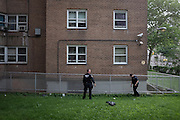 Police officers search for evidence after a fatal shooting outside of the Albany Houses housing project in Crown Heights.