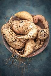 Ipomoea batatas 'Bonita' - Sweet potato