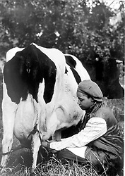 Alf Kumalo - Since political stories were banned, this 1960s shot of Winnie Mandela milking a cow provided an offbeat angle on her tomboy childhood.