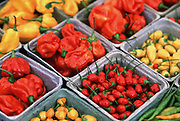 Garden market display of containers of various types of chile peppers