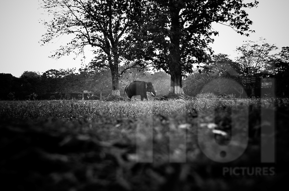 An elephant stands between two trees inside the Hue citadel, Vietnam, Southeast Asia