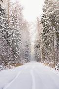 Small forest road on snowy winter day in forests in Kemeri National Park (Ķemeru Nacionālais parks), Latvia Ⓒ Davis Ulands | davisulands.com