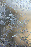Window frost, Maine.