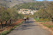 Road through vineyard to village of Lliber, Marina Alta, Alicante province, Spain