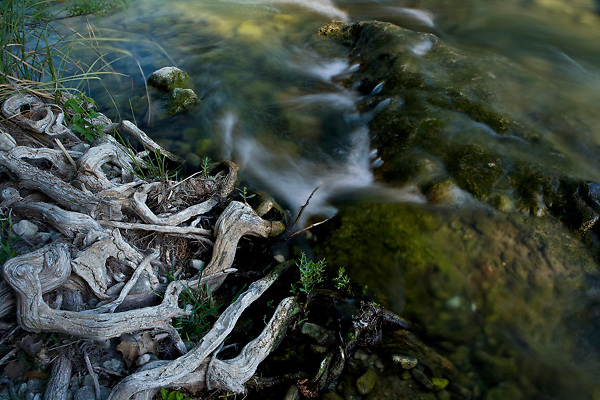 Stock photo of the waters of the Frio River in the Texas Hill Country flowing around rocks and tree roots