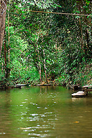 Small tributary between Nanga Sumpa Longhouse and guest lodge in the jungles of Sarawak.