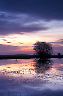 Purple sky and Clouds at sunset reflected in pond, Merced Grasslands, Central Valley, California