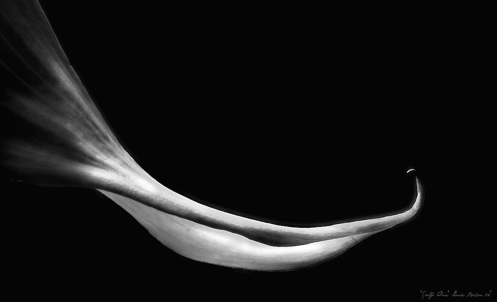 'SIXTY ONE' ... This title coincided with my age at the time(61) and how I felt about my body and soul at the time. I saw, as I shot, my arm, my age, for the first time, shocking really, at first, how thin my wrist had become, bone and cartilage protruding, skin taught. But there was lightness, a freedom and a clarity of purpose as it stretched into the darkness, but it wasn't a void it came to a brilliant point; the present. I don't believe I've ever been so sure of myself, before, as I have been at Sixty One. (Revised 1/19 (66): It only gets better).