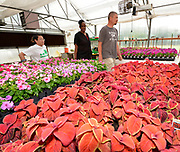 Volunteer Andrew Grull gives a tour of the greenhouse to 4-H ambassador Caleb Kinzinger, 16, from Freeburg, Ill and Jackie Joyner Kersee on Thursday, May 30, 2019 in East St. Louis, Ill. (Tim Vizer/AP Images for National 4-H Council)