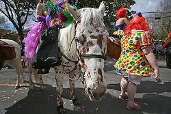 02 March 2014. New Orleans, Louisiana.<br /> Mardi Gras. A spotty horse and walker at the Krewe of Thoth parade in Uptown New Orleans.<br /> Photo; Charlie Varley/varleypix.com