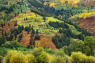 Autumn colors,  Independence Pass, Colorado
