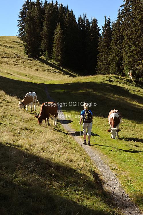 Suisse, Canton de Bern dans la région du Haut-Simmental, randonnée sur alpages de la Wispile // Switzerland, Bern canton, Hight-Simmental region, hikking on Wilpise pastures, MODEL RELEASE OK, ref : SNL05