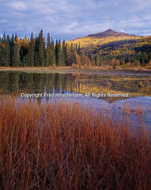 Thermal marsh, Liard River Hot Springs Provincial Park, northern British Columbia, Canada.