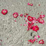 """Rose petals on volcanic mud. The steep trek to the rim of the highest volcano is the first ritual of the Hinglaj pilgrimage. Pilgrims come up to throw a coconut in the cold mud (to thank the gods for granting their wish) and to apply the holy mud to their faces etc. The area around Chandragup (meaning """"Moon Well""""), a sacred site to Hindu of 3 mud volcanoes (mainland Asia's largest ones)."""