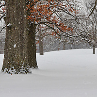 """As the Snow Falls""<br />