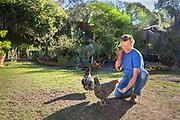 Senior adult man feeding chickens