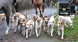© Licensed to London News Pictures. 26/12/2018. Chiddingstone, UK.Hounds arriving, Old Surrey Burstow and West Kent Boxing day Hunt meet at Chiddingstone Castle,Chiddingstone. Photo credit: Grant Falvey/LNP