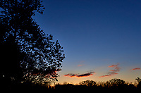 Tree silhouette  and clouds at dawn. Image taken with a Leica T camera and 23 mm f/2 lens (ISO 100, 23 mm, f/10, 1/250 sec).