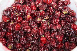 Raspberries, Cotacachi City & Market