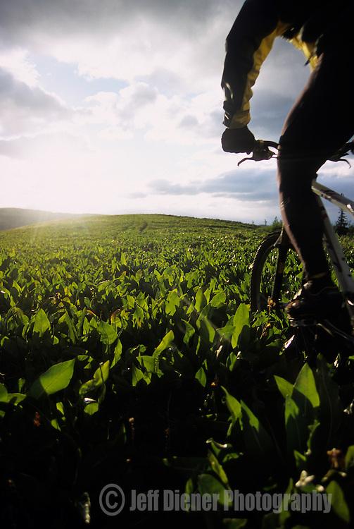 A mountain biker rides through a green meadow in Jackson Hole, Wyoming.