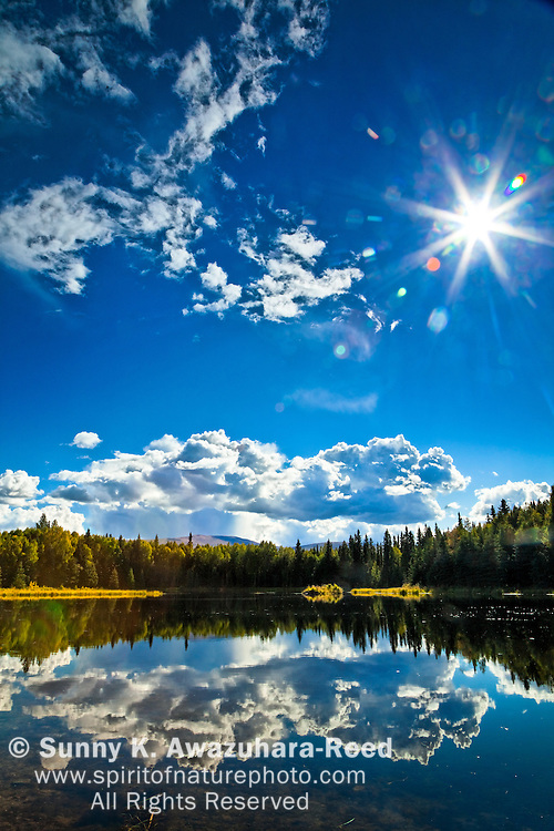 Chena River State Recreation Area, Fairbanks, Interior Alaska.