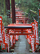 gates at the Sasuke Inari shrine in kamakura Japan