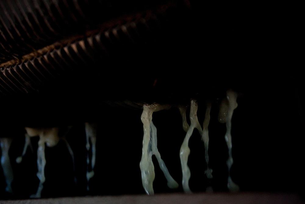 Patos de Minas_MG, 02 de Fevereiro de 2010..Historias - Cachaca Leblon..Na foto, a moagem da cana...Foto: LEO DRUMOND / NITRO